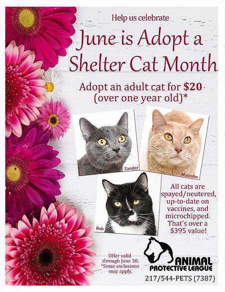 Adopt a Shelter cat 2021.jpg