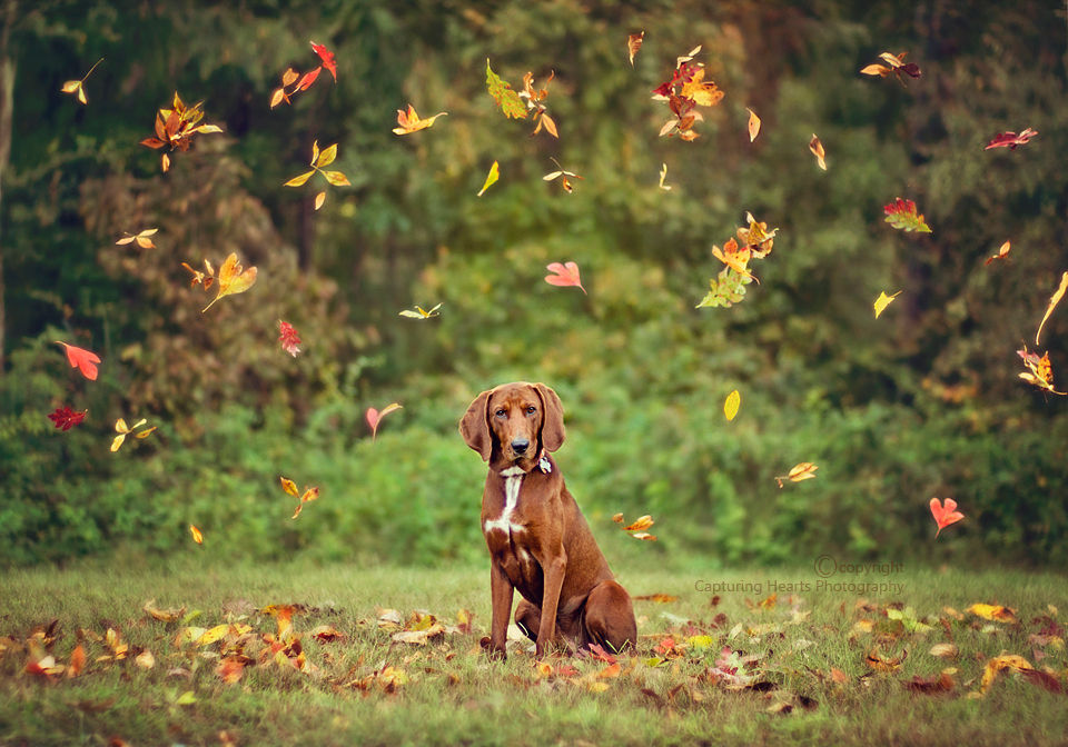 Image result for fall dog picture