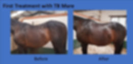 Equine Scenar Bodywork Treatment