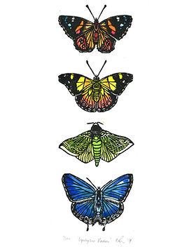 Butterfly-Rainbow-WEB.jpg