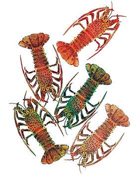 Crayfish-SM-1080x1080-241KB-WM.jpg