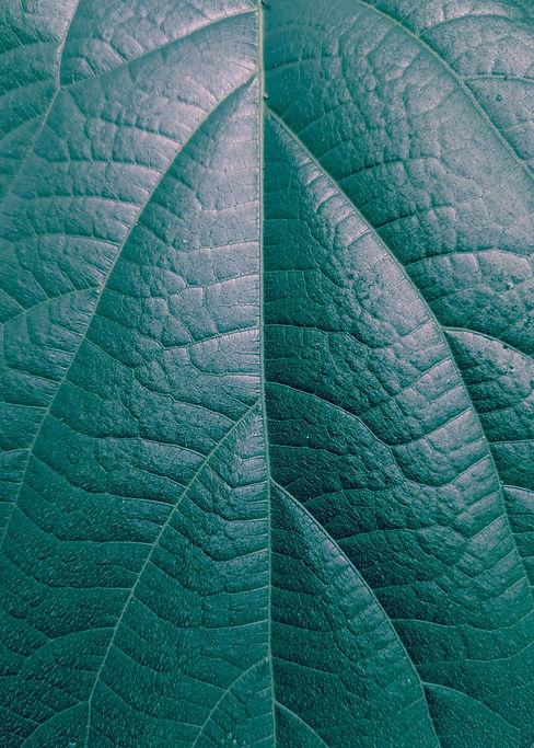 pexels-andre-william-2104499.jpg