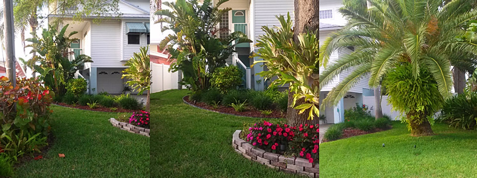 gulfcoast land design landscaping flame thrower palm