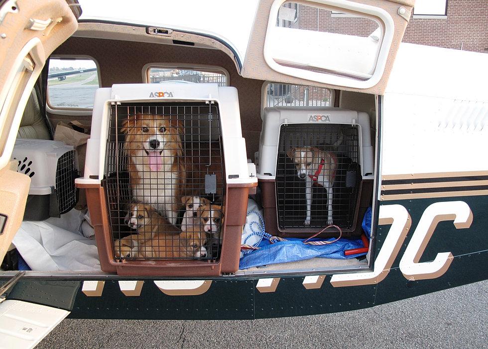 3/23/12 - 11 Dogs - 3.2 hrs - 322 mi