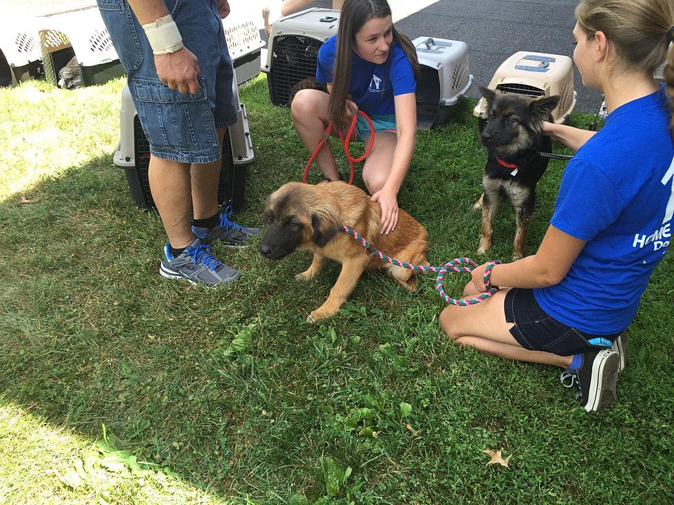 8/9/15 - 20 Dogs - 8.2 hrs - 1177 mi