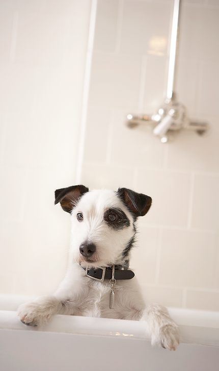 Dog wash and pet grooming services in san diego california dirty paws petwash grooming solutioingenieria Images