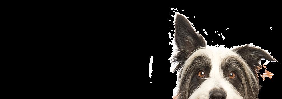 Dog Grooming Torquay