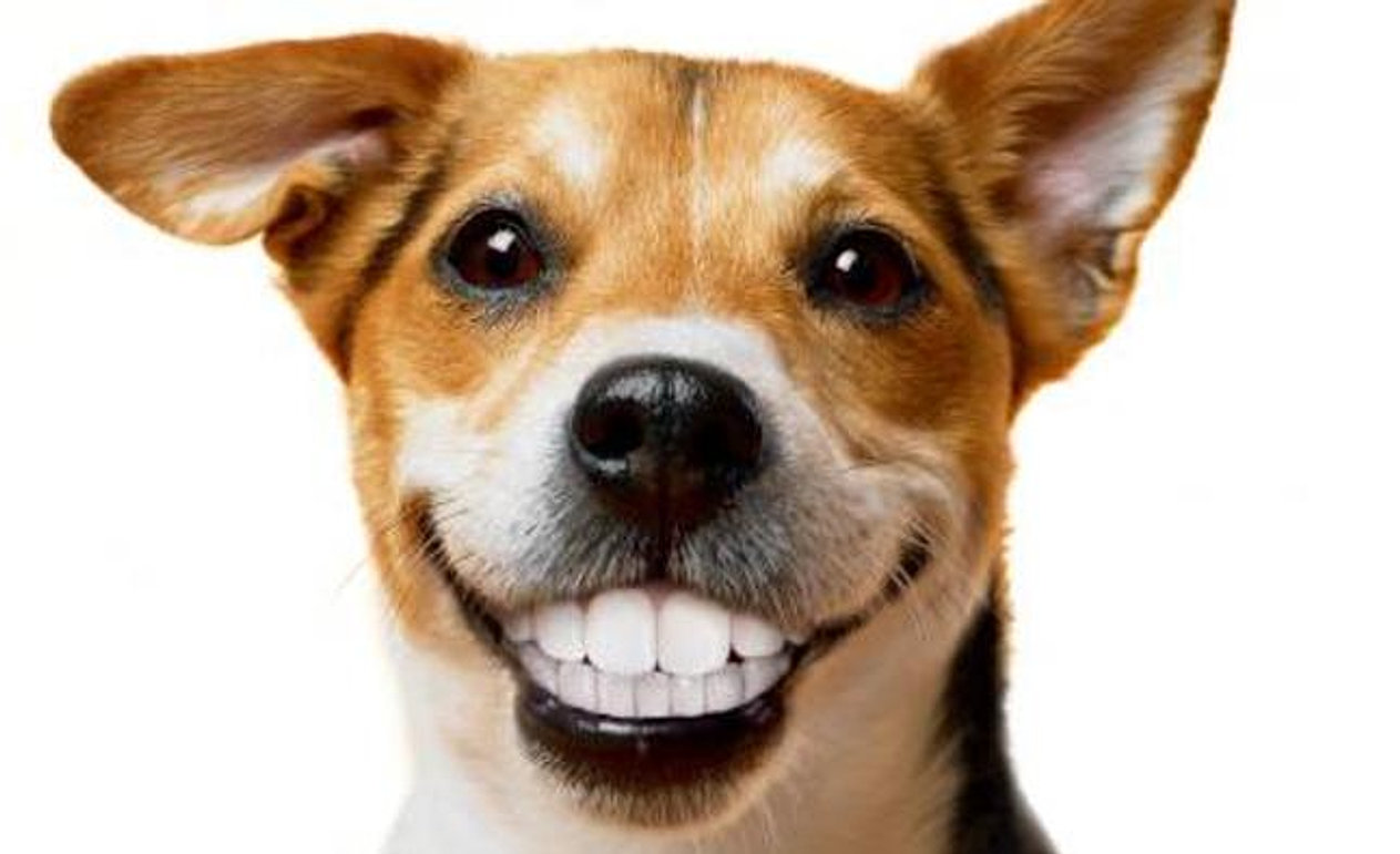 Help A Dog Smile Reviews
