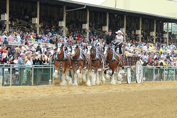 Suttler post farm clydesdales for Frederick county fairgrounds christmas craft show