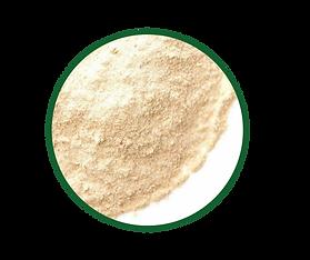 Lactobacillus-fermentum-K9-1-768x644.png