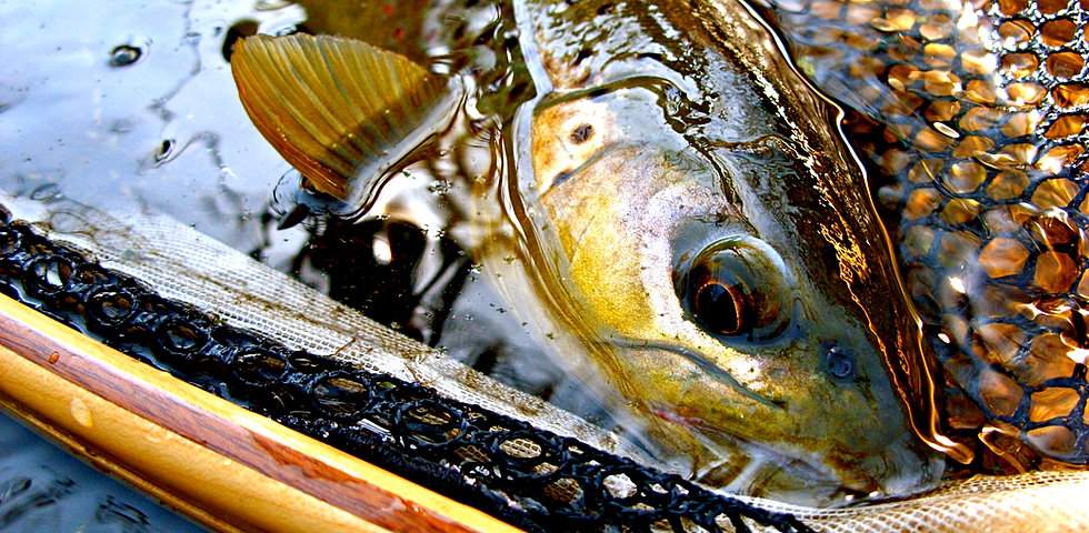 Driftless on the fly iowa fly fishing guide service for Driftless fly fishing