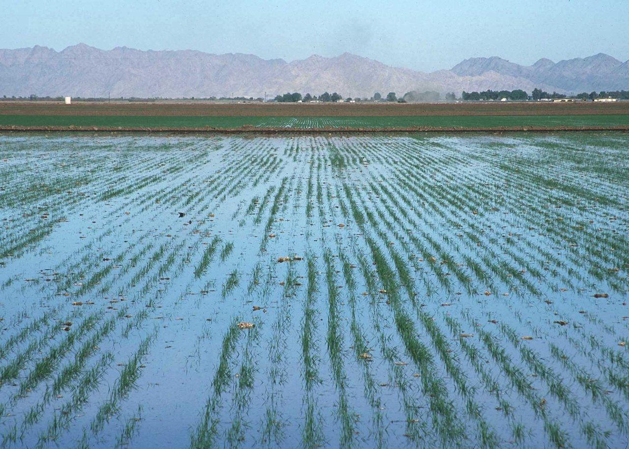 Irrigation AZ