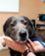 veterinarios-e1512081713674-850x400.jpg