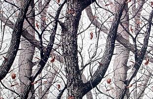 Hardwoods Snow Camouflage Realtree