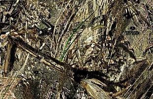 Duckblind Camouflage