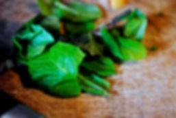 Mint; Ingredients for Irina's Istrian Ravioli Ricotta Recipe