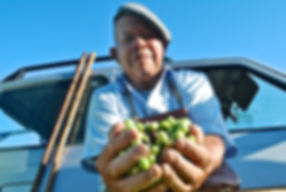 Tania's Father Holding Olives, Monasterace, Italy