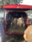 Goats for Sale at a Farmers Market in Zadvarje, Croatia