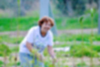 Working on Grol Garden, Cyprus
