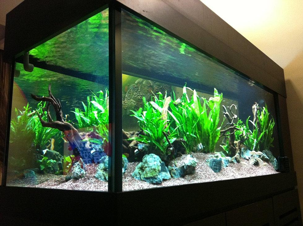 Custom design build setup aquarium tanks singapore for Custom made fish tanks