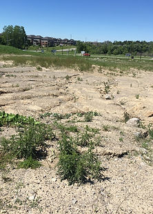 Vacant land being assessed for future residential development