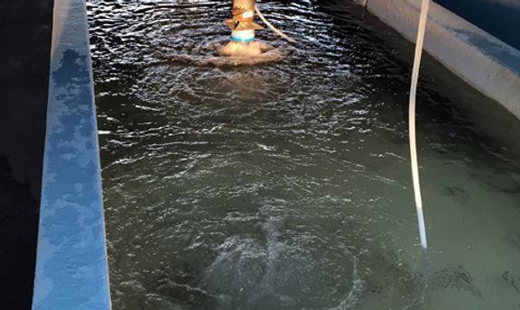 Pond stocking stockafish parkersfishfarm fish stocking for Fish stocking texas