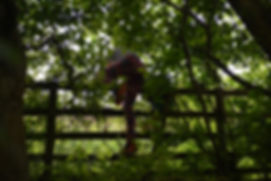 Child climbing over a fence in a wood