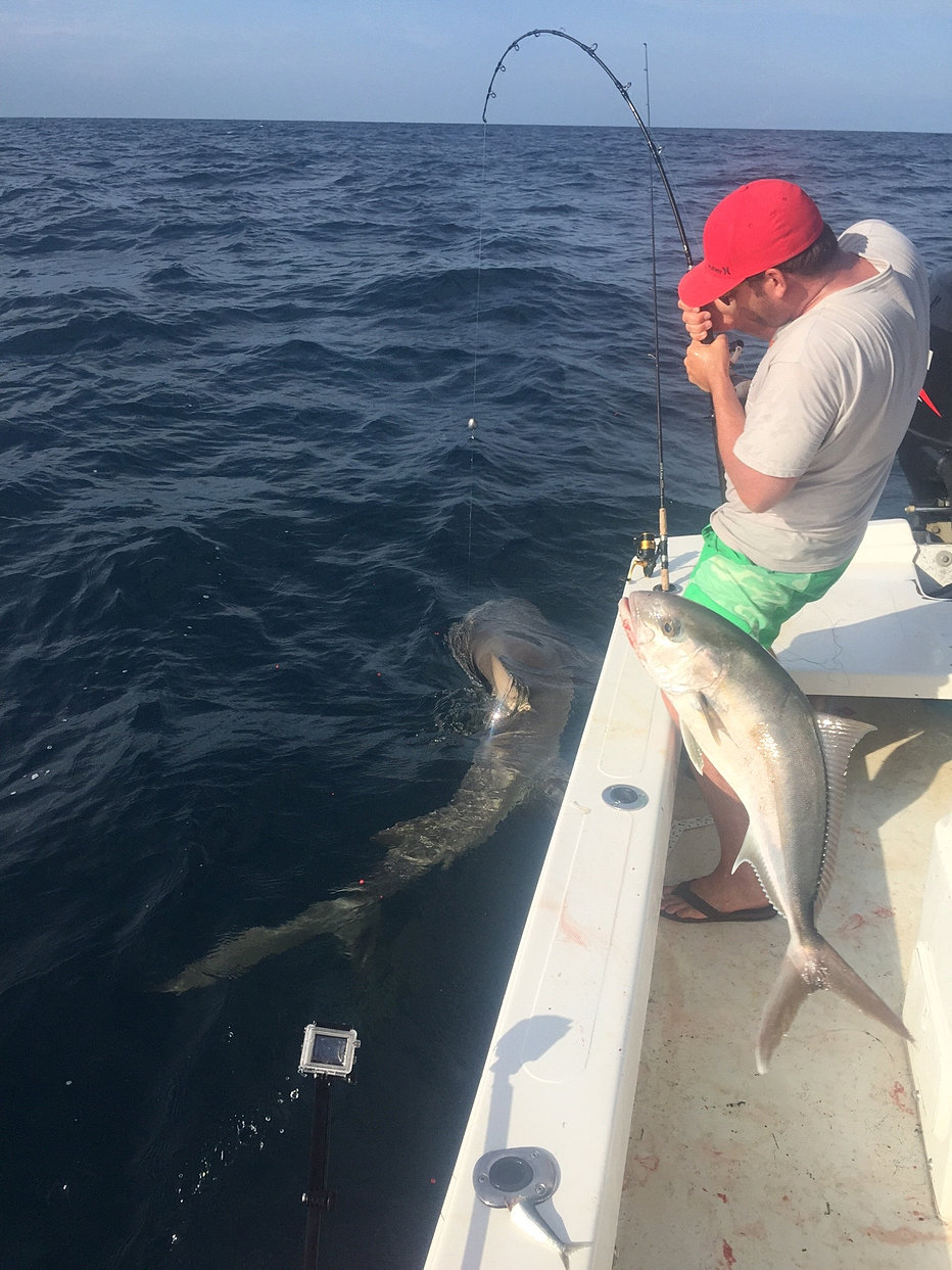 st george island charter fishing photos