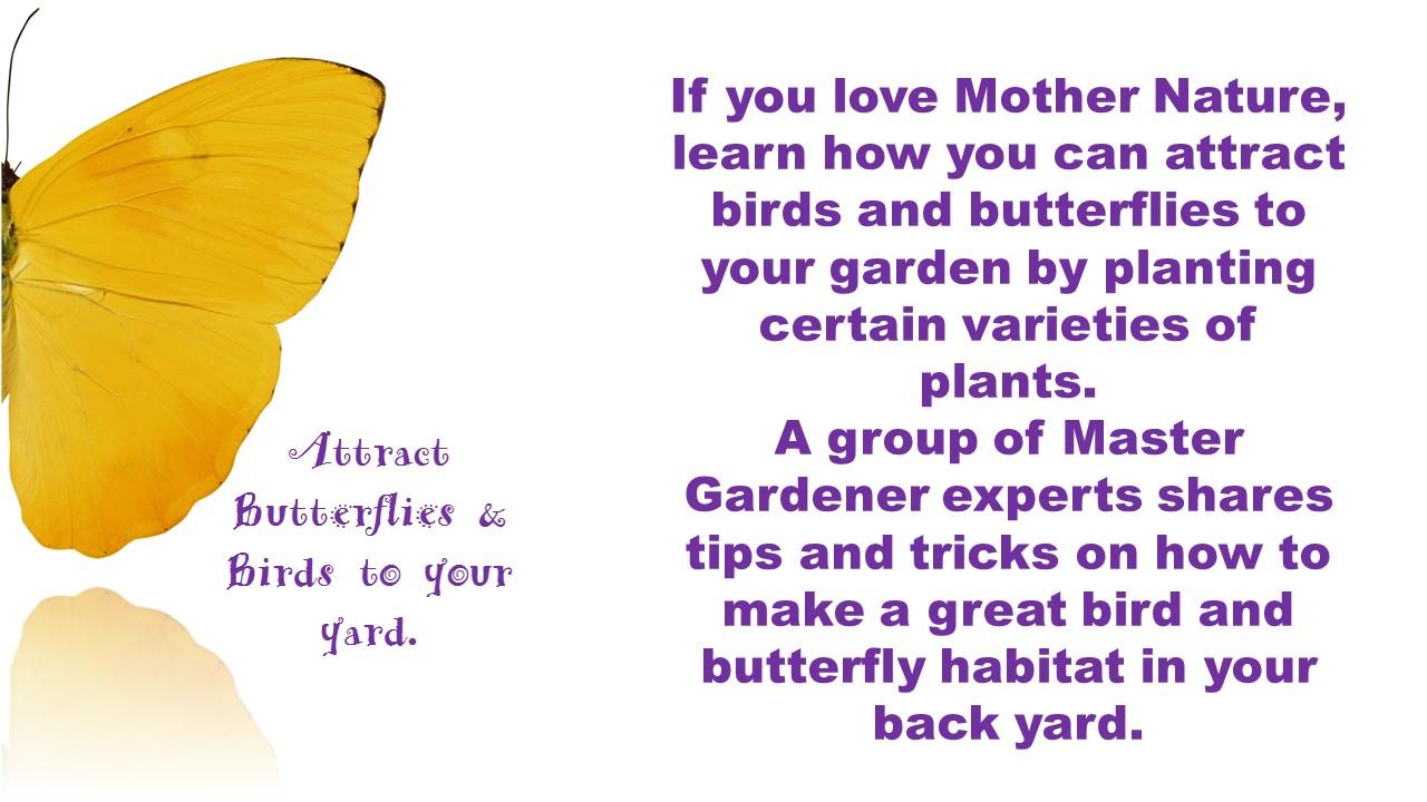 how to attract butterflies u0026 birds to your yard mooredirt