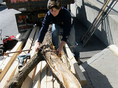 Locally-Harvested Black Locust Wood