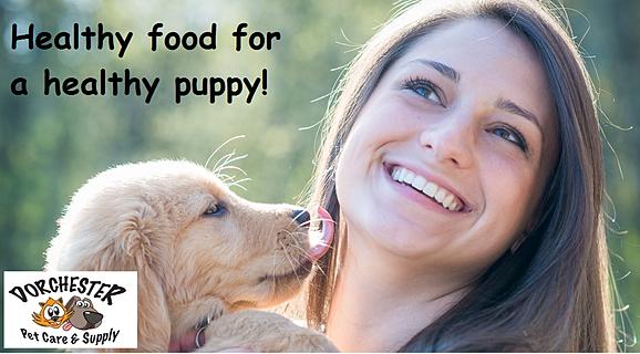 Healthy Puppy