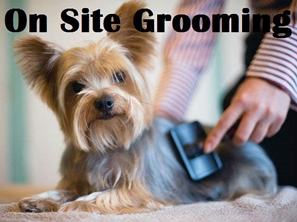 Onsite Grooming