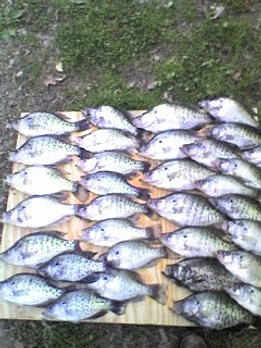 Reelfoot crappie fishing guide reelfoot crappie guide for Reelfoot fishing report