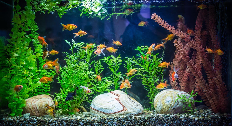 Красивые аквариумы с рыбками фото