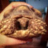 Rex The Tortoise