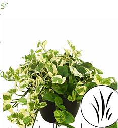 Artistic Plant Creation 6 12 Quot