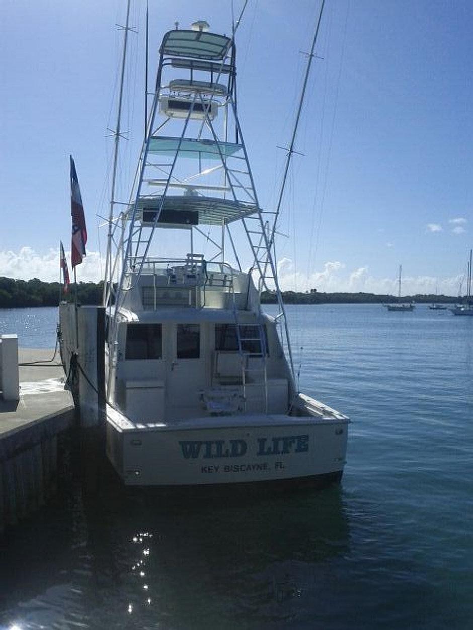 Wildlife charter deep sea fishing miami florida charter for Miami fishing charter