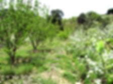 Verger permaculturel au printemps