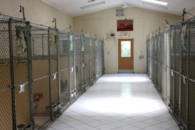 Dog Kennel Property For Sale Fl