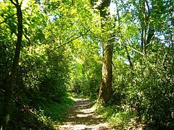 bosque-mazamitla.jpg
