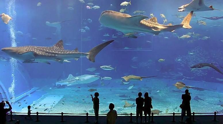 Vidrios para albercas piscinas acuarios - Cristales para piscinas ...