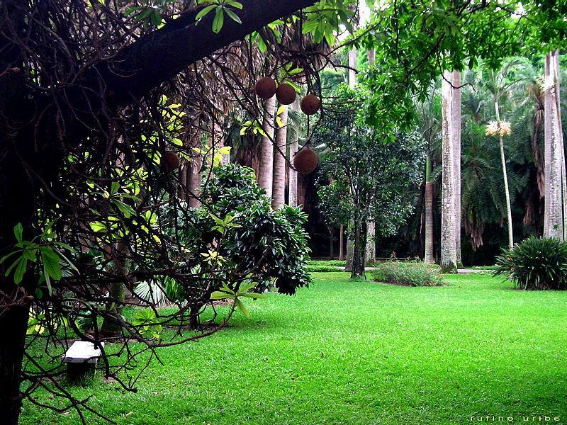 800px-Jardin_botanico_ccs.jpg