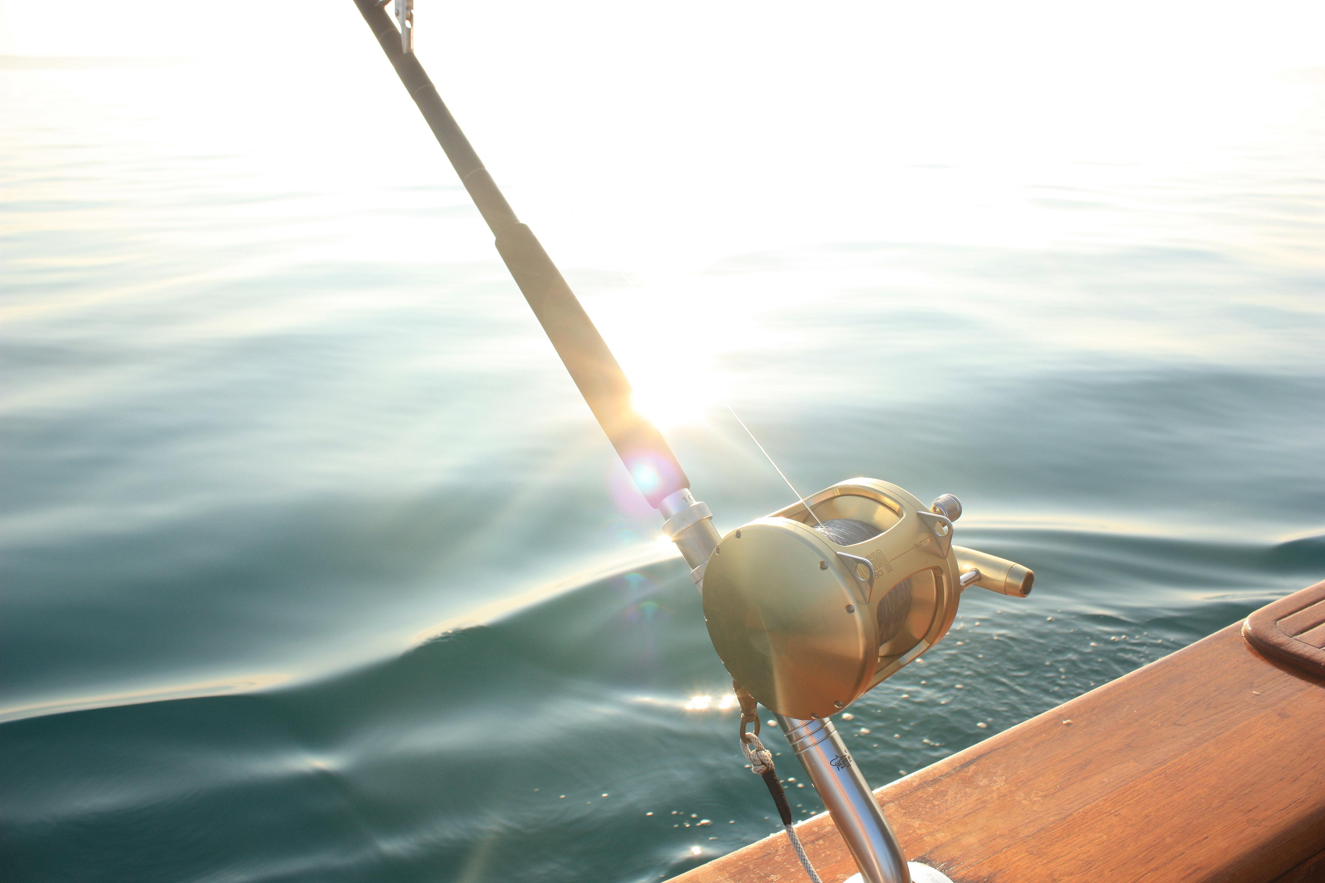 Viking charters tuna fishing newfoundland bluefin tuna for Tuna fishing rod and reel