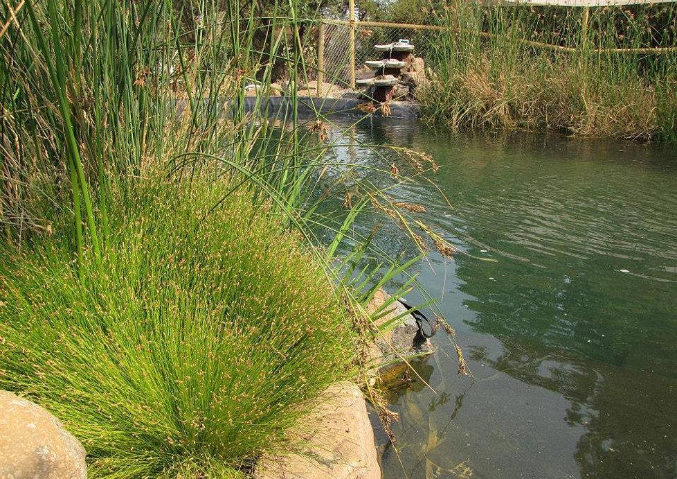 Bioantu piscinas naturales humedales artificiales for Piscinas naturales chile