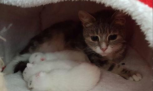 mum and kitts.JPG
