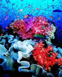 Wix.com Ocean plants created by ctriffo23 based on Blank Website ...