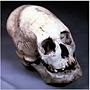 Enormous Craniums