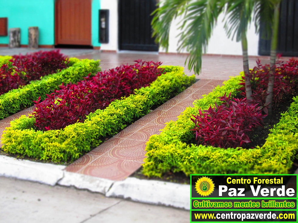 Centro paz verde dise o de jardines online for Diseno de jardines lima