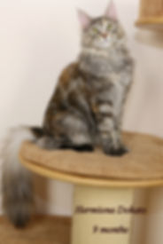 Hermiona Dokato 9 Monate