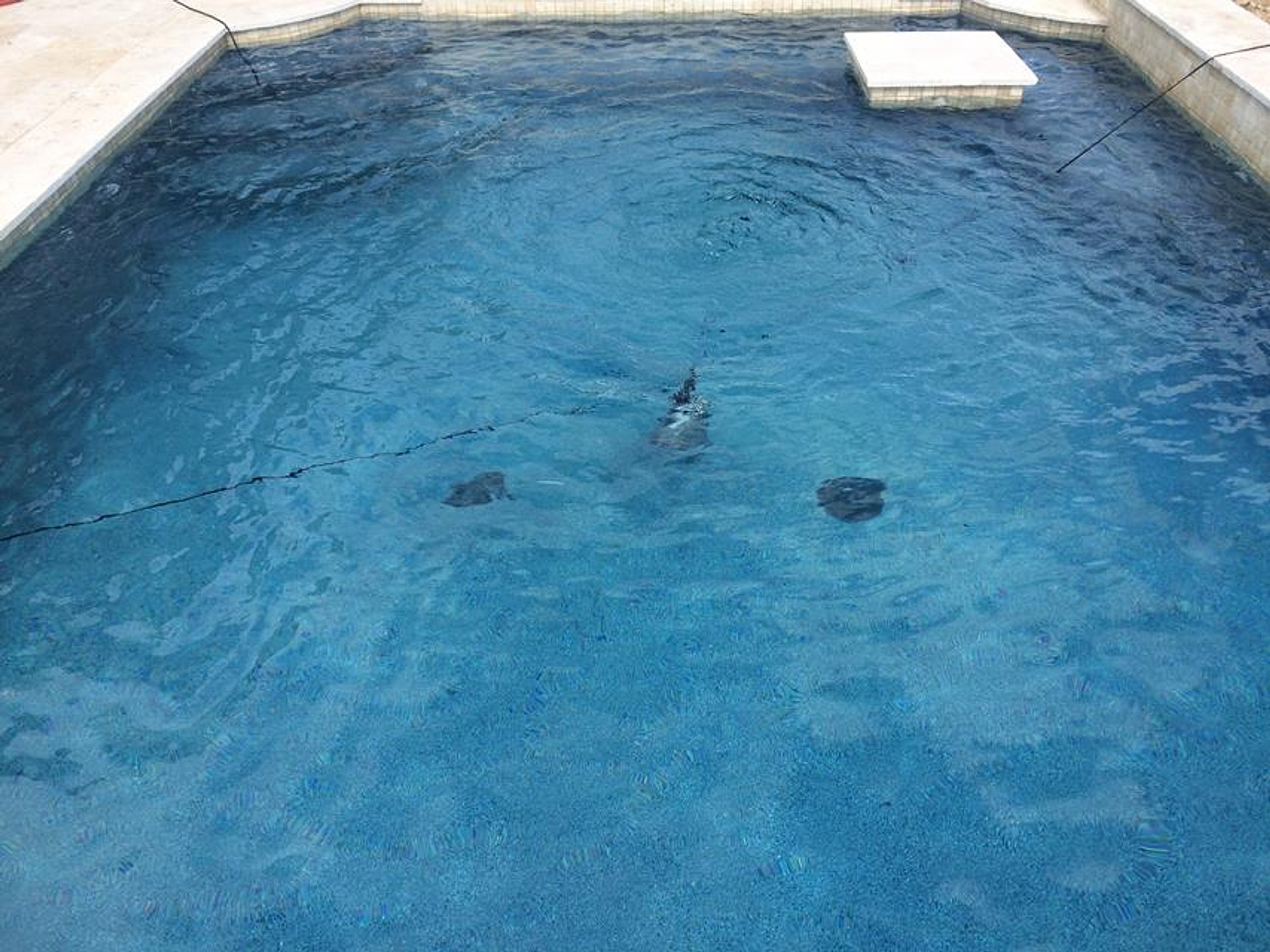 Image Result For Pool Builders Houston